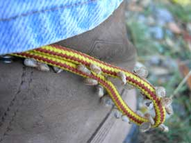 houndstongue seed on a shoelace