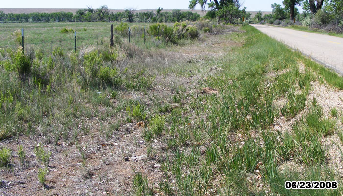 Russian knapweed controlled with Milstone herbicide.